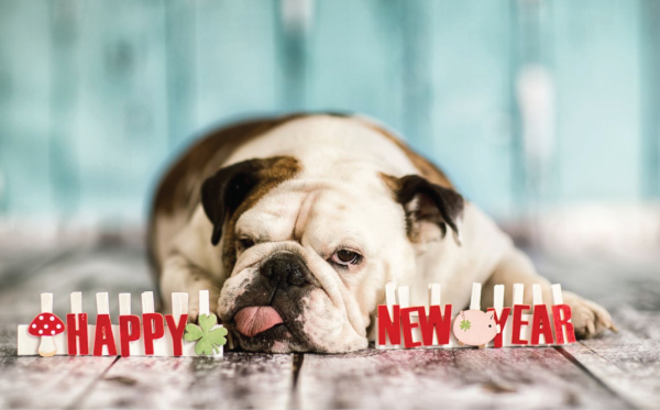 5 New Year's Resolutions For Dog Parents